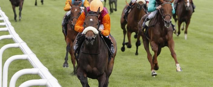 Wettstar De Pferdewetten